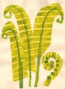 225‐7164 <b>ferns</b>  collage  &#8208;Greg&nbsp;Poole