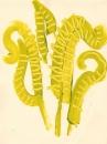 225‐7161<b>fern study</b>mendipsacrylic‐GregPoole