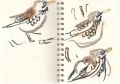 bl-009   <b>fieldfares</b>   mendips   wax crayon     ‐Greg Poole