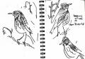 redwings‐GregPoole