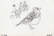 somali short-toed lark ‐ ink pen ‐ 12 x 17.5 cms ‐ £30 ‐     ethiopia‐Greg Poole