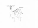 <b>bushbuck</b>    inkpen  A3  £50‐GregPoole