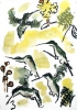 <b>barbados antillean crested hummingbird</b>      wax crayon & watercolour   30 x 21 cms   £60‐Greg Poole