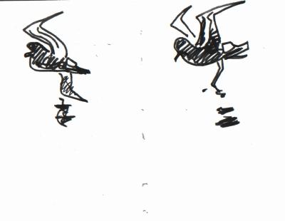 storm petrels