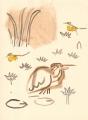 212&#8208;6885&emsp;<b>squacco & wagtails</b>&emsp;djoudj gainthe&emsp;gouache&emsp;38 x 28 cms&emsp;&#8208;Greg&nbsp;Poole