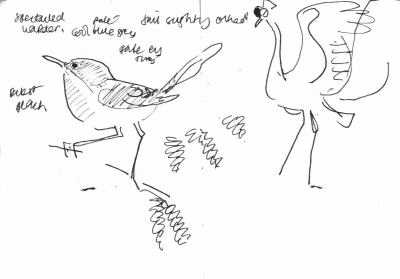 spectacled warbler & crowned crane