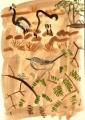 211&#8208;6864&emsp;<b>spectacled warbler & crowned cranes</b>&emsp;djoudj sahel&emsp;gouache&emsp;38 x 28 cms&emsp;&#8208;Greg&nbsp;Poole