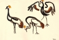 211&#8208;6867&emsp;<b>crowned cranes</b>&emsp;djoudj sahel&emsp;gouache&emsp;38 x 56 cms&emsp;&#8208;Greg&nbsp;Poole