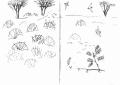211&#8208;6855&emsp;<b>sand martins, sahel</b>&emsp;djoudj sahel&emsp;ink pen&emsp;A6 sketchbook&emsp;&#8208;Greg&nbsp;Poole