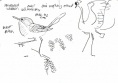 211&#8208;6857&emsp;<b>spectacled warbler & crowned crane</b>&emsp;djoudj sahel&emsp;ink pen&emsp;A6 sketchbook&emsp;&#8208;Greg&nbsp;Poole