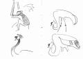 211&#8208;6858&emsp;<b>crowned cranes & patas monkey</b>&emsp;djoudj sahel&emsp;ink pen&emsp;A6 sketchbook&emsp;&#8208;Greg&nbsp;Poole