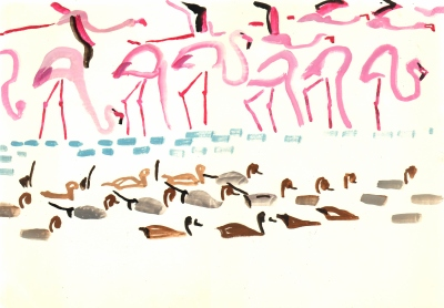 <i></i><br/>flamingos, pintail & whistling duck