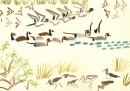 213‐6890<b>pintail, whistling duck, waders & sand martins</b>djoudj grand lacgouache35 X 50 cms‐GregPoole