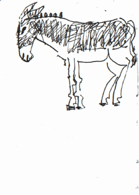 <i></i><br/>donkey