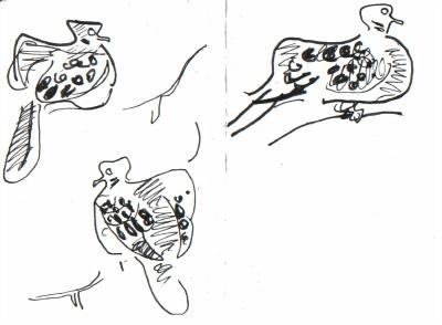 <i></i><br/>turtle doves