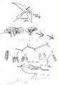 208‐6811<b>bonelli's warbler, bee-eater & swallows</b>savannah nr. palmarinink penA5 sketchbook&#8208;Greg&nbsp;Poole