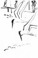 218&#8208;6963&emsp;<b>sandwich terns</b>&emsp;st louis&emsp;dip pen & indian ink&emsp;38 x 28 cms&emsp;&#8208;Greg&nbsp;Poole