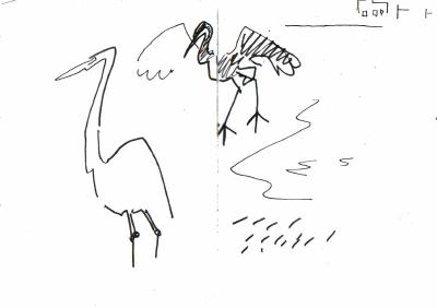 <i></i><br/>egrets