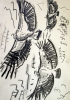 <b>griffon vultures 2</b>    graphite  A3 (42 x 29.7 cms)  £60&#8208;Greg&nbsp;Poole