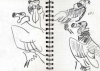 <b>red headed vulture</b>      graphite   A5 notebook pages   NFS&#8208;Greg&nbsp;Poole