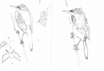53‐4202 <b>reed warblers</b>   A5 sketchbook &#8208;Greg&nbsp;Poole
