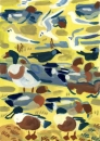 21‐4435<b>shoveler, wigeon, shelduck, jackdaw & BH gulls</b>gouacheA4 (29.7 x 21cms)£110‐GregPoole