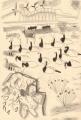 126‐6436<b>barnacle geese</b>islay, scotlandgraphite42 x 29.7 cms (A3)£120&#8208;Greg&nbsp;Poole