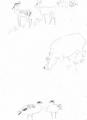 126‐4574<b>egyptian geese, hippo & impala</b>A3£50&#8208;Greg&nbsp;Poole