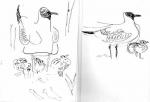 53‐4197<b>black-headed gull with chicks</b>A5 sketchbook&#8208;Greg&nbsp;Poole