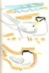 53‐4199<b>little terns</b>A4 sketchbook&#8208;Greg&nbsp;Poole