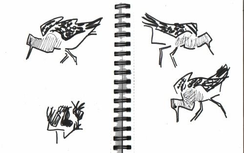 ruff & lapwings