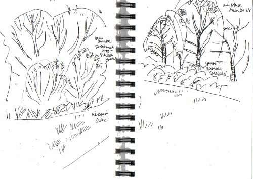meadow fringe, alder & willow