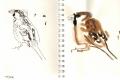 <b>house sparrow</b>   ink pen & gouache  A5 sketchbook ‐GregPoole