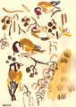 goldfinches in alder‐GregPoole