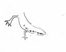 newt‐GregPoole