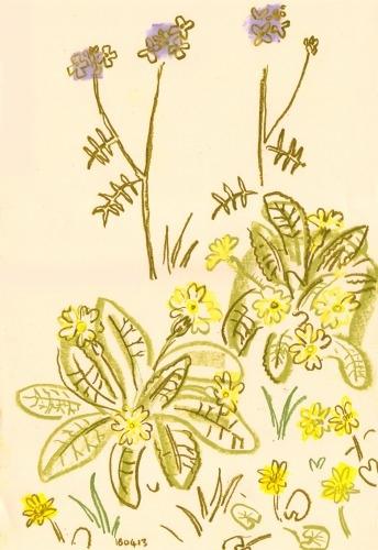 primrose, cuckoo flower & celandine