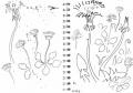dandelions & daisies‐GregPoole
