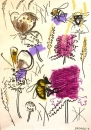 18‐4721 <b>bee, hoverfly, meadow brown, ringlet, betony & scabious</b>   A2 (59.4 x 42 cms) not available‐Greg Poole