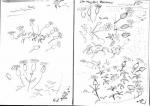 53‐4203<b>sea campion</b>A5 sketchbook&#8208;Greg&nbsp;Poole