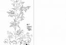 53‐4204<b>yellow horned poppy</b>A5 sketchbook&#8208;Greg&nbsp;Poole