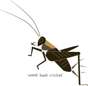 wood cricket