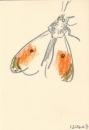 199‐6715<b>orange-tip</b>wax crayon29.7 x 21 cms (A4)£70&#8208;Greg&nbsp;Poole