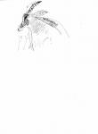 110‐4717<b>sable antelope</b>A3‐GregPoole