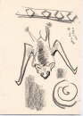 192‐6647 <b>false vampire bat</b> bhandavgarh, india graphite 29.7 x 21 cms (A4) £40&#8208;Greg&nbsp;Poole