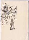 <b>jackal</b>    graphite  21 x 14.8 cms (A5)  £40‐GregPoole