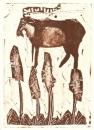 spanish ibex & asphodels‐GregPoole