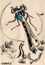 76‐4137 <b>blue-tailed damselfly</b>   A5 (14.5 x 21 cms) £30‐Greg Poole