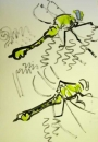 76‐4144 <b>club tailed dragonfly</b>   A4 (29.7 x 21cms) ‐Greg Poole