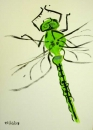 76‐4162 <b>emperor dragonfly just emerged</b>   A4 (29.7 x 21cms) SOLD‐Greg Poole