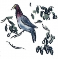 21‐4398 <b>barbados scaly-naped pigeon</b>  wax crayon & watercolour 30 x 21 cms £30‐Greg Poole